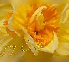 Easter card - daffodil by Magdalena Warmuz-Dent