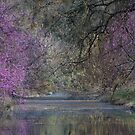 Davis Arboretum Creek by Diego  Re