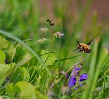 Beefly  by relayer51