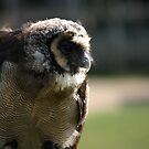 Feathery companion by Tibbs