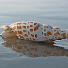 Seashell by the Seashore by David Alexander Elder