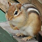 I was just wondering if you might have some nuts? by Heather Crough