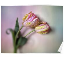 Wall Flowers Poster