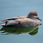 Wild and Wonderful Ducks by Elaine  Manley