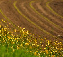 butter fields by Jean Poulton