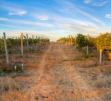 Wineland sky by Gideon van Zyl