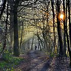 Walking The Dog .              [ please view larger ] by relayer51