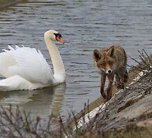Red Fox 3585 by DutchLumix