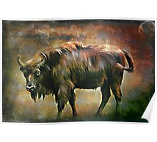 European bison(Poland) Poster