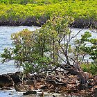 Biscayne Bay National Park by joevoz