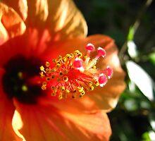 Sunny Hibiscus by Vanessa Barklay