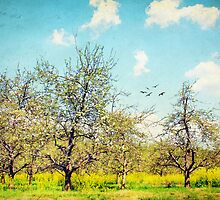 The Orchard by Darren Fisher