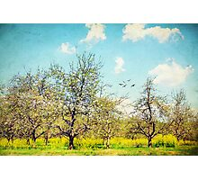 The Orchard Photographic Print