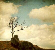 My Tree by Darren Fisher