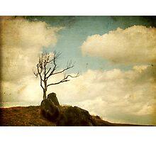 My Tree Photographic Print