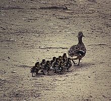 Ducklings by digiphotography