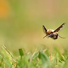 Bee flight. by relayer51