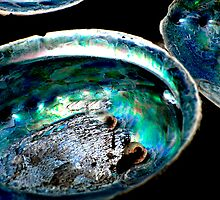 Paua Shells by Jenny Dean