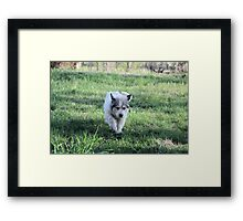 Flying Ears Sheila Framed Print