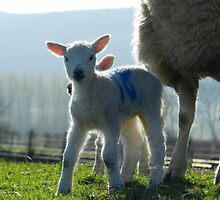 Spring has sprung! by weecritter