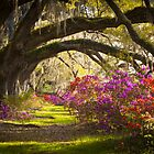Charleston SC Magnolia Plantation Gardens - Memory Lane by Dave Allen