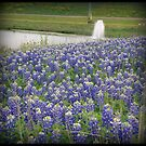 Bluebonnet field by Gerry Brown