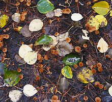 A forest carpet of fungi and Autumn leaves. by Esther's Art and Photography