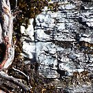 Twisted root, Old rock by Janice E. Sheen
