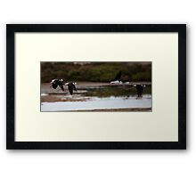 Flying Stilts Framed Print