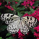 Butterfly in the Butterfly Garden at Changi Airport by SophiaDeLuna