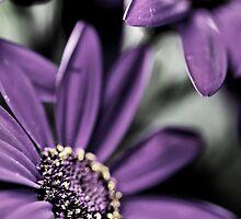 Purple Haze... squared... by Bob Daalder