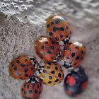 The Ladybug Huddle by Larry Lingard-Davis
