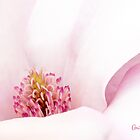 Blushing Magnolia by Anita  Pollak