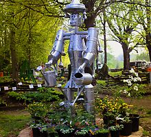 THE TIN MAN by Pauline Evans