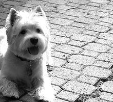 B/W Scottish Terrier by MarianBendeth