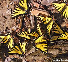 22 yellow wings by Erykah36