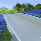 Bluebonnet Road by Shiva77