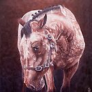 Moody Appaloosa-Ballinasloe Fair 2011 by Pauline Sharp