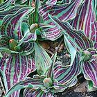 Purple and Green Stripes by peterrobinsonjr