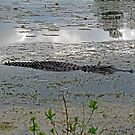 Beautiful Gator by Cynthia48