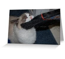 Give That Back...It's MY Broom!! Greeting Card