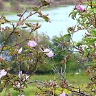 Wild Roses By An Irish Lake by Fara