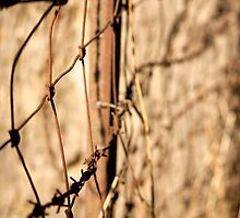 Fence Line by D-GaP
