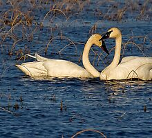 Love Birds by Jeff Weymier