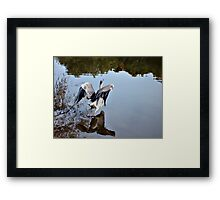 Great Blue Heron at Grover Cleveland Park, Essex Fells NJ - reflections3 Framed Print