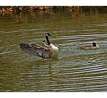 HHH = One  Heafty Honkin Honker Chest Photographic Print