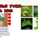 """BANNER WINNER CHALLENGE """"ALL THINGS TWIN"""" APRIL 2012 by Guendalyn"""