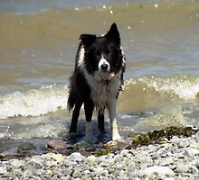 Indy and the Waves by Michael Haslam