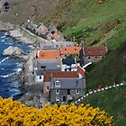 Crovie in springtime by Sue Arber