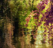 Echoes of Monet - Cherry Blossoms - Brooklyn Botanic Garden by Vivienne Gucwa